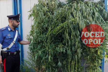 Messina: scoperta piantagione di marijuana. Tre arrestati mentre innaffiavano