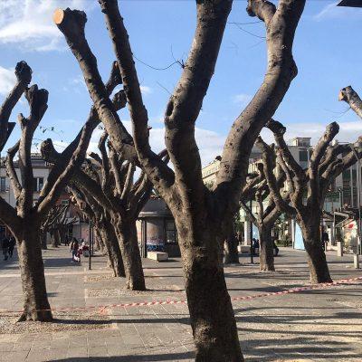 """Potatura alberi: Gioveni in prima Commissione """"Apprezzamento per i lavori svolti a vantaggio del decoro e della sicurezza"""""""