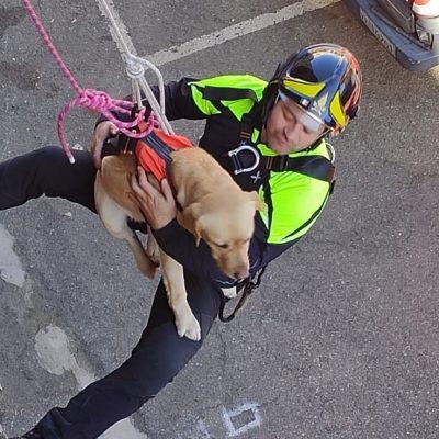Pompiere Grisù in addestramento: il vigile del fuoco a 4 zampe del Comando Provinciale di Messina