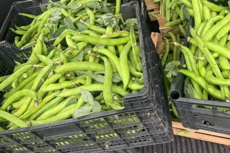 Mercato Vascone: accertata violazione ordinanza vendita fave. Soggetti affetti da favismo nelle vicinanze.