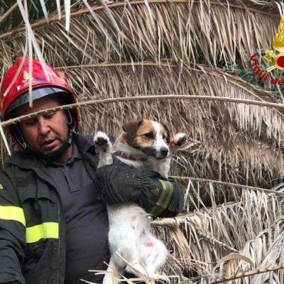 I Vigili del Fuoco mettono in salvo un cane caduto in un dirupo e lo riconsegnano ai padroni