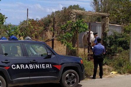 I Carabinieri denunciano un allevatore di Caronia. Sanzione da 10 mila euro