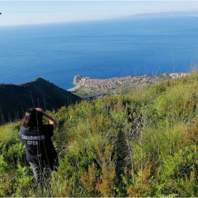 Operazione Adorno – i Carabinieri Forestali presidiano lo Stretto di Messina