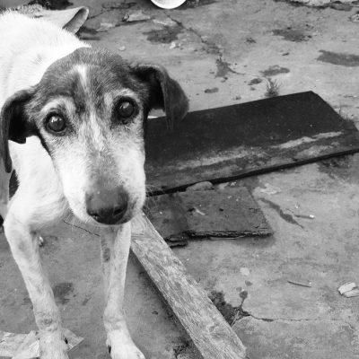 """""""Amici del cane"""" in piazza Unione Europea contro la deportazione di 450 cani di Messina"""
