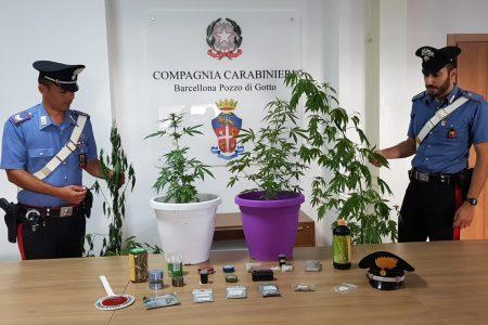 Coltiva e detiene sostanze stupefacenti in casa. Un   57enne arrestato dai Carabinieri.
