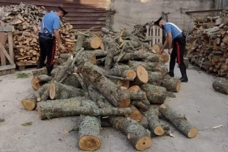 Tentano di rubare legna in area boschiva per rivenderla. Arrestati dai Carabinieri.