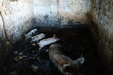Polizia Specialistica: interventi per allevamento abusivo, maltrattamento animali, discariche abusive