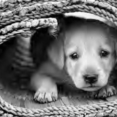 Randagismo – In 6 mila contro la deportazione da Messina di oltre 200 cani.