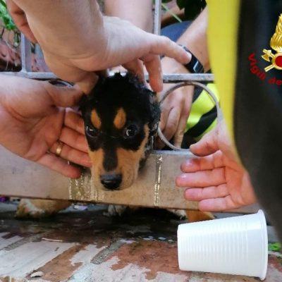 I Vigili del Fuoco salvano cucciolo di cane